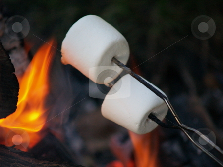 Roasting marshmallows stock photo, Cooking marshmallows on an open campfire flame by Michelle Bergkamp
