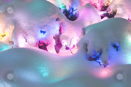 Snow Lights stock photo, Christmas lights under a blanket of new fallen snow. by Marc Saegesser