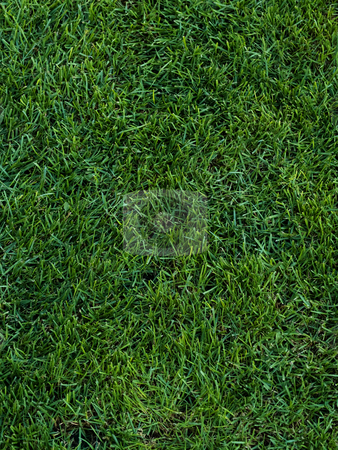 Grass  stock photo, Spring grass texture, fields and meadows by Adrian Costea