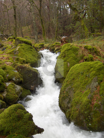 Mossy Stream stock photo, A small stream flows between mossy rocks in a Welsh forest. by Jessica Tooley