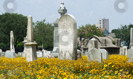 Southern Graveyard 2 stock photo, Cemetery where all the graves are above ground and yellow wild flowers are in full bloom.  This type cemetery is typical in Louisiana and parts of Texas by Marburg