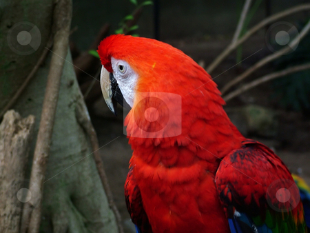 Parrot stock photo, A Rainforest parrot by Michelle Bergkamp
