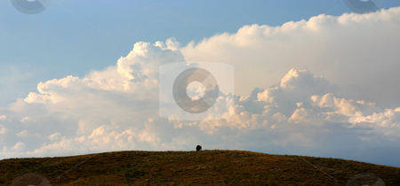 Approaching Storm stock photo, A large thunderstorm is building behind a lone buffalo atop a hill.  Custer National Park, Black Hills, SD. by Marc Saegesser