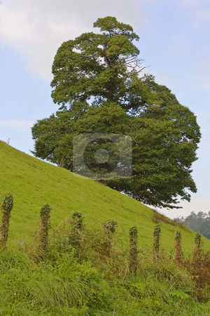 Tree on hill stock photo, Nature image of mountains an green trees and forest by Ivan Montero