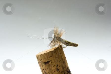 Fly stock photo, An imitation of a fly to use it for trout fishing by Ivan Montero