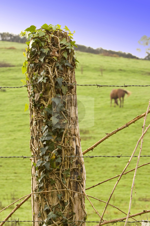 Fence post at horse ranch stock photo, Image of a calm horse in the farm eating by Ivan Montero