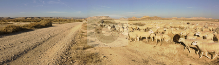 Sheep stock photo, Image of a sheperd with the cattle in Las BArdenas, Navarra, Spain by Ivan Montero