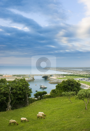 Sheep stock photo, Image of a landscape with sheep and sea by Ivan Montero