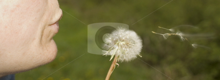 Dandelion stock photo, A girl blowing a dandelion in the country by Ivan Montero