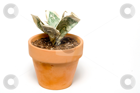 Money Flower stock photo, Monet doesn't grown on trees. Money is a flower. by Robert Byron