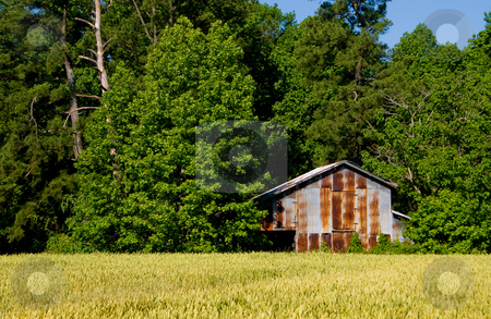 Tobacco Barn stock photo, An old tobacco barn on a farm. by Robert Byron