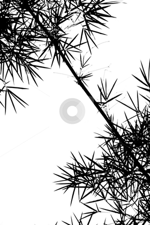 Bamboo Leaves Silhouette Background stock photo, A photographic illustration of black bamboo leaves on a white background by Stefan Breton