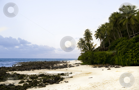 Beachview stock photo, Rough Beach with rocks and trees by Claudia Van Dijk