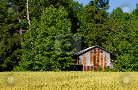Tobacco Barn stock photo, An old tobacco barn on a farm. by Robert Byron