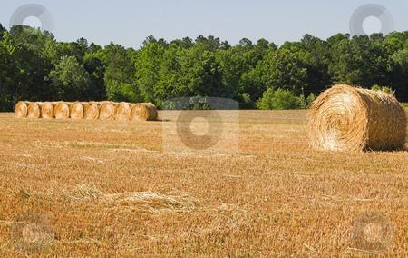 Hay Bales stock photo, Large bales of freshly cut wheat hay. by Robert Byron