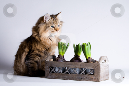 Cat is waiting behind the flower stock photo, Young beautiful cat is waiting behind the flower to steal a leaf. by Frenk and Danielle Kaufmann