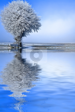 Winter landscape a single tree stock photo, Winter landscape a single white tree under ice by Frenk and Danielle Kaufmann