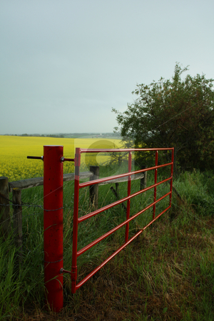 Red Gate stock photo, A red farm gate by a yellow blooming canola field. by Jessica Tooley