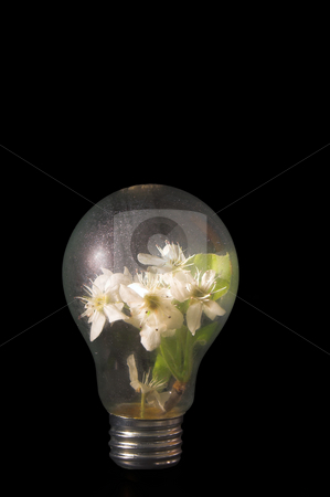 Light Bulb Flowers stock photo, Peach blossums growing in a light bulb. by Robert Byron