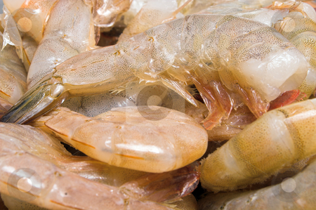 Shrimp stock photo, A large pile of headless shrimp ready to be cleaned. by Robert Byron