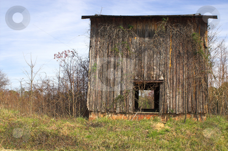 Old Tobacco Barn stock photo, Agriculture History - An old abandoned tobacco barn. by Robert Byron