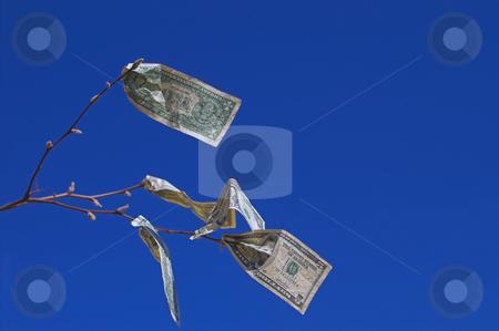 Money Tree stock photo, Money really does grow on trees, right? by Robert Byron