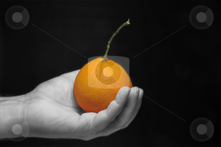 Holding an Orange stock photo, A person holding a freshly picked orange. by Robert Byron
