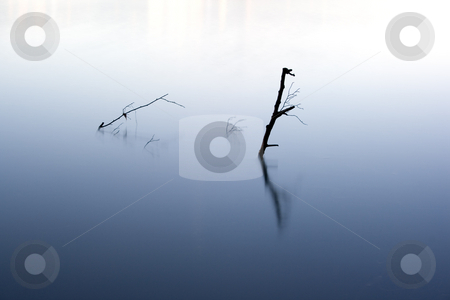 Abstract water plant stock photo, Abstract image a plant and its reflexion in the water by Ivan Montero
