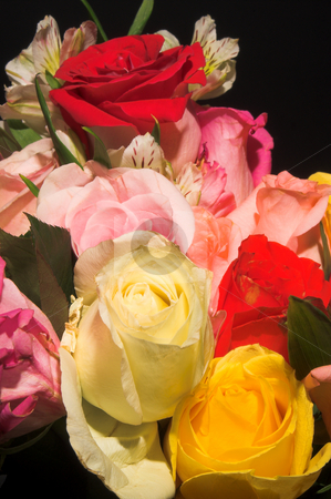Assorted Roses stock photo, An assortment of colorful freshly cut roses. by Robert Byron