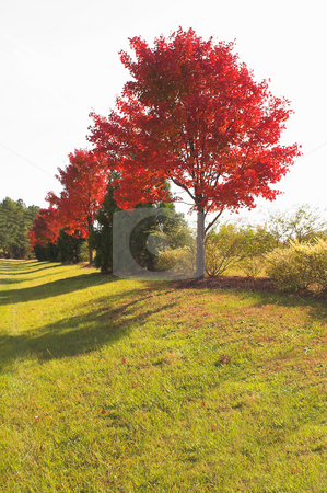 Fall Colors stock photo, Beautiful fall colors on an autumn afternoon. by Robert Byron