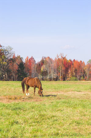 A Horse stock photo, A horse grazing in a pasture on a farm. by Robert Byron