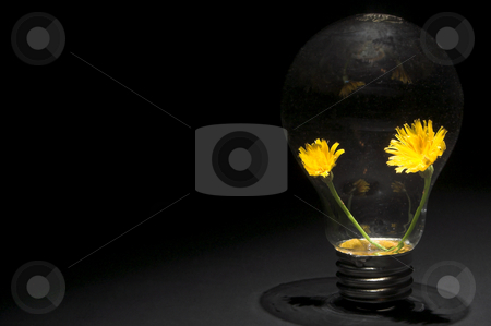 Dandelion Light Bulb stock photo, A pair of dandelions in a light bulb. Conservation, ecology concept. by Robert Byron