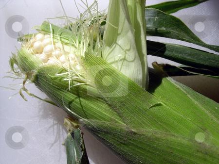 Ear of corn stock photo, An ear of corn still in it's husk by Rob Wright