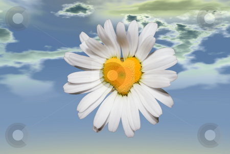 Love stock photo, A heart shaped daisy shot high in the sky by Richard Nelson