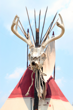 Deer Skull stock photo, Deer skull in front of teepee by Jack Schiffer