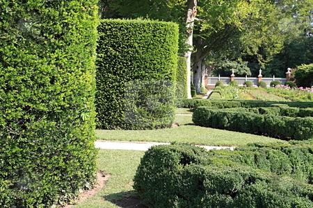 Hedge garden  stock photo, Hedge gardens of willamsburg Va by Jack Schiffer