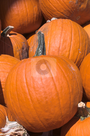 Pumpkins stock photo, A large pile of plump and juicy holliday pumpkins. by Robert Byron