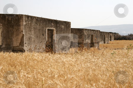 Ruined Houses in Wheat Field stock photo, Ruined concrete houses of the Rotenberg Power Station, Palestine Electric Company, in a wheat field near Baquora, Jordan. by Andrei Harwell