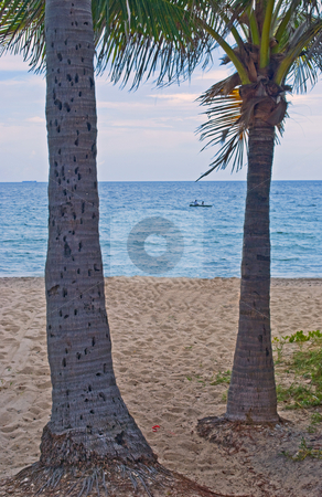 Florida Beach stock photo, Florida beach with palm trees,sand and a fishing boat by Robert Cabrera