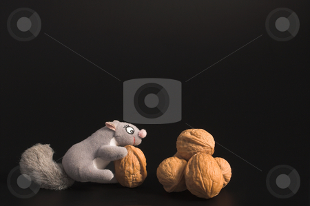Squirrel and Walnuts stock photo, A squirrel and an assortment of walnuts. by Robert Byron