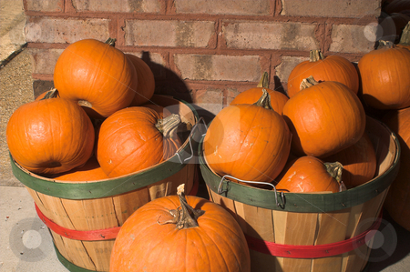 Pumpkins stock photo, Baskets of fall harvest pumpkins ready for pie making. by Robert Byron