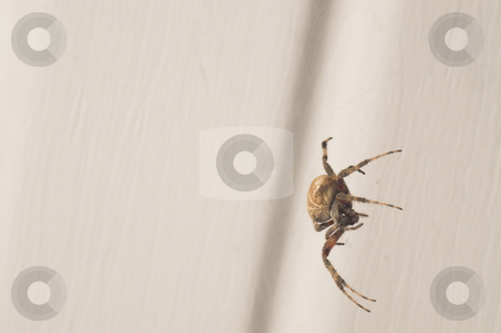 Orb Weaver Spider stock photo, An orb weaver spider in his web. by Robert Byron