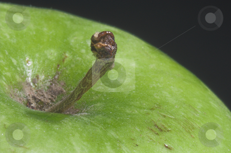 Granny Smith Apple stock photo, A close-up of a Granny Smith Apple. by Robert Byron