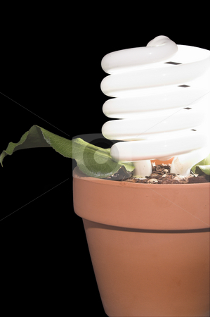 Light Bulb Potted Plant stock photo, A fluorescent light bulb growing in a pot. by Robert Byron