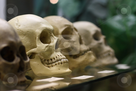 Human skulls standing on the glass shelf stock photo, Human skulls standing on the glass shelf by Andrey Yanevich
