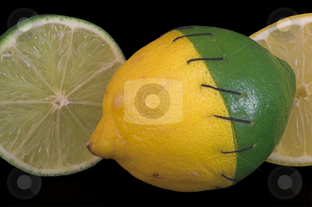 Stitched Lemon and Lime stock photo, A lemon and a lime stitched together. by Robert Byron