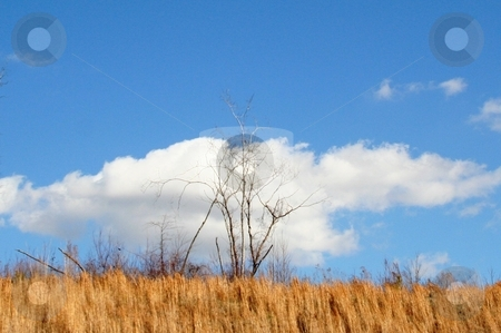 Clouds in the blue sky stock photo,  by Debbie Hayes