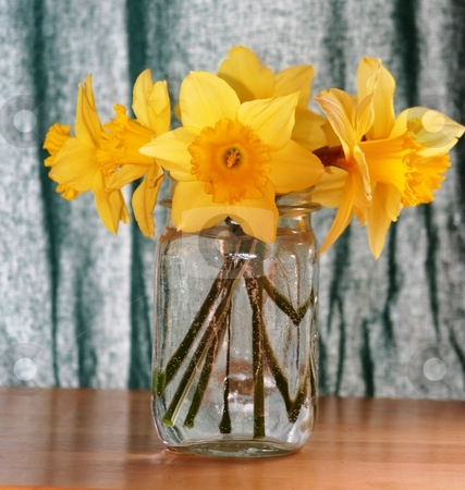 Daffodils on table stock photo, Yellow Daffodils in a vase on a table by Debbie Hayes