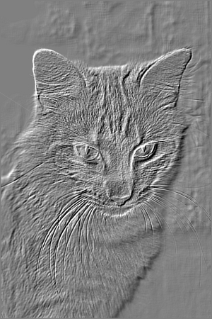 Embossed Picture of Cat stock photo, This is a picture of my departed cat, Barney.  I turned a regular picture of him into an embossed picure using a photo editing program by Debbie Hayes