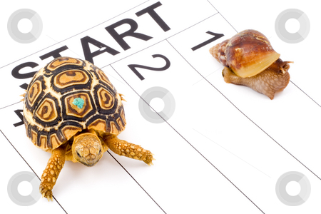 Speed Contest stock photo, A tortoise competing with a snail in a runnig race by Petr Koudelka